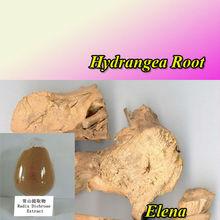 Littleflower Mussaenda Root Extract---CHANG SHAN