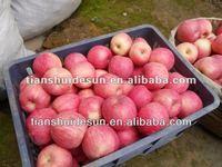 Fresh fuji apple(72~125 pieces/ctn)