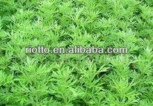 Folium Artemisiae Argyi Volatile oil (powder)
