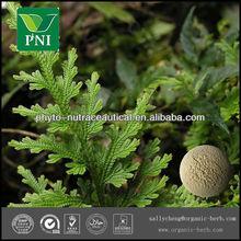 Natural Amentoflavone Powder