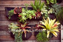 bag soil--make up by greenbar wall Coleus blumei Benth. planting bag