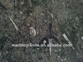 Unión de piedra alta calidad marruecos negro fósil de mármol