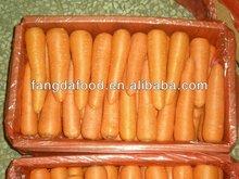 fresh carrots,carrot,red carot,vegetable