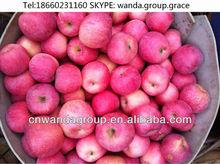Shandong Yantai fresh red Fuji apple direct supplier for Europe/Australia Market-1211