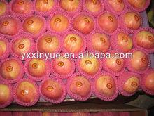 Chinese Fresh Red Fuji Apples