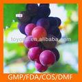 de semilla de uva de harina