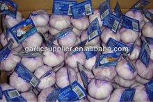 fresh garlic new crop