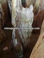 de madera petrificada de piedra