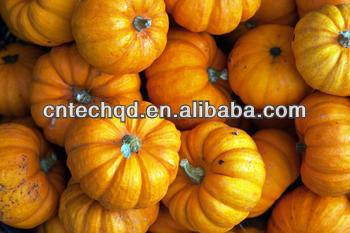 new crop Chinese fresh pumpkin