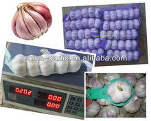 Chinese Fresh Nature Garlic, OEM Factory