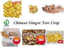 """"""" varieties of ginger"""""""