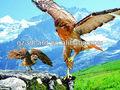 3D new imagem da águia