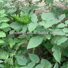 Natural Black Cohosh P.E.5% triterpenoid saponis