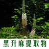 Manufacturer Supplier Top Quality 100% Natural Black Cohosh Extract 2.5% 3% Triterpene glycosides