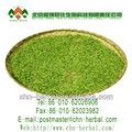 minceur du thé vert sencha biologique