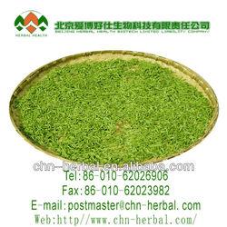 Famous Chunmee best green tea