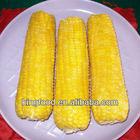 Hot selling iqf sweet corn