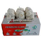 China Natural Fresh Pure White Garlic 2012 Latest Price Shandong