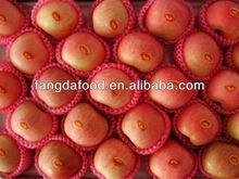 Chinese fuji apple fruit