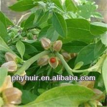 High quality natural Ashwagandha Ayurvedic Extract