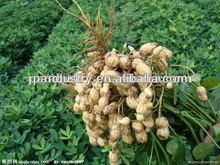 Plant growth enhancer for peanut Thidiazuron tdz 95%tc 50%wp