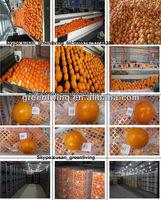 Fresh navel orange 40-88pcs in 15kg plastic box