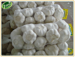 Buy direct from china factory natural garlic price