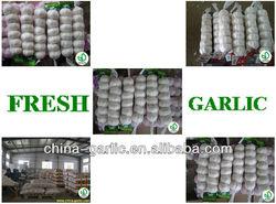 2013 China Grade A Garlic / Jinxiang Garlic / Garlic Producter