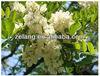 Sophora japonica extract Troxerutin Powder CAS No.: 7085-55-4