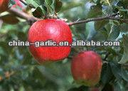 fresh fruits & vegetables for 2013