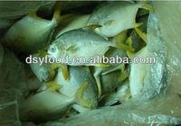golden pomfret fish