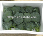 sell fresh broccoli