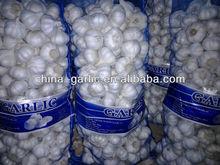 Good China Garlic Supplier, Old Company