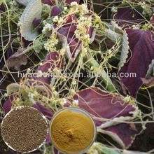 100% Natural Semen Cuscutae Seed Extract