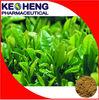 Chinese herbal Instant Green Tea Powder,matcha powder