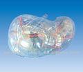 transparente segmento de fígado se32730
