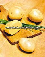 fresh potato exporter