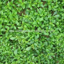 stevia suger natural sweetner stevia powder price natural sweetner plants extract stevia