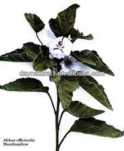 Halal +Kosher Marshmallow leaves Used for Cigarette