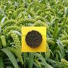 fertilizer natural npk 12-12-17