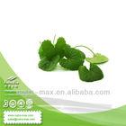 100% Natural Gotu Kola Extract Powder 10%- 80% Triterpenes
