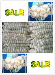 Garlic/Garlic Price/Fresh Garlic, Hot Sale To More Than 56 Country
