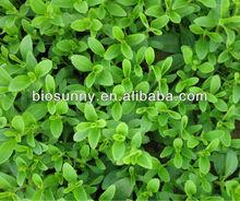 Top Quality Stevia Rebaudiana Extract ( 7:1-50:1)