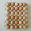 Caixa de embalagem de ovo fábrica