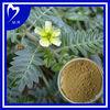 100% Natural Tribulus terrestris P.E.Total Saponins 40%-90%