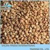 popular buckwheat,new 2012 crop buckwheat husk