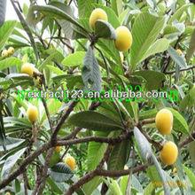 Bulk Natural Garcinia Cambogia Extract hydroxycitric acid(HCA-Ca/Potassium) 50%,60%, Herbal extract