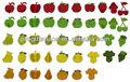 Decoração de frutas de tecido- frutas e legumes