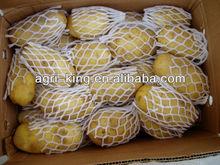 export potato