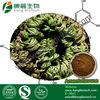 Cosmetic Cream Ingredients Amentoflavone Powder 90% Hplc